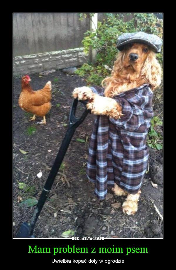 Mam problem z moim psem – Uwielbia kopać doły w ogrodzie