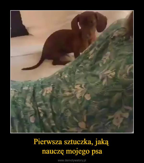 Pierwsza sztuczka, jaką nauczę mojego psa –