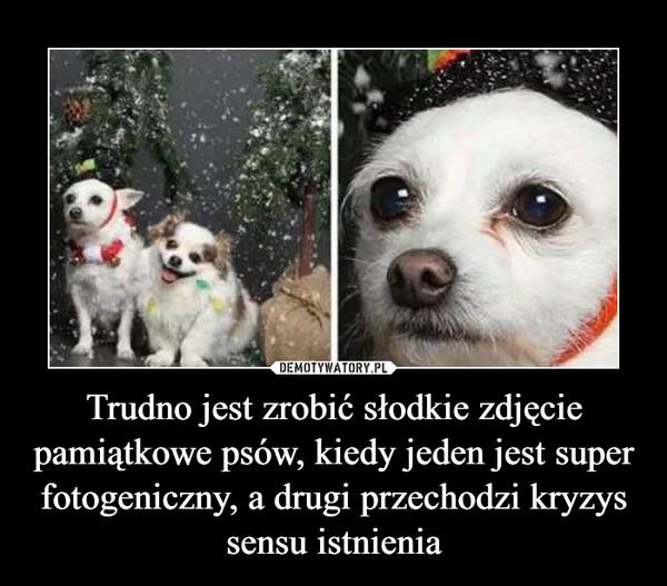 Trudno jest zrobić słodkie zdjęcie pamiątkowe psów, kiedy jeden jest super fotogeniczny, a drugi przechodzi kryzys sensu istnienia –