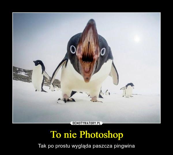 To nie Photoshop – Tak po prostu wygląda paszcza pingwina