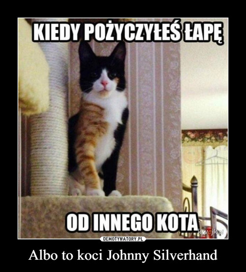 Albo to koci Johnny Silverhand