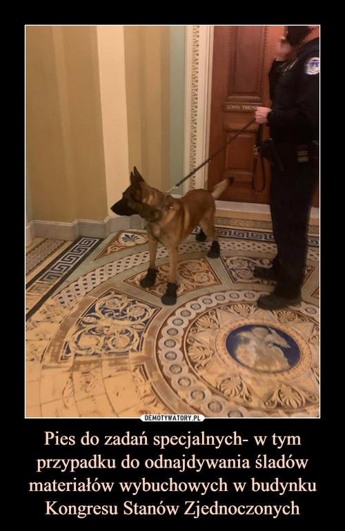 Pies do zadań specjalnych- w tym przypadku do odnajdywania śladów materiałów wybuchowych w budynku Kongresu Stanów Zjednoczonych