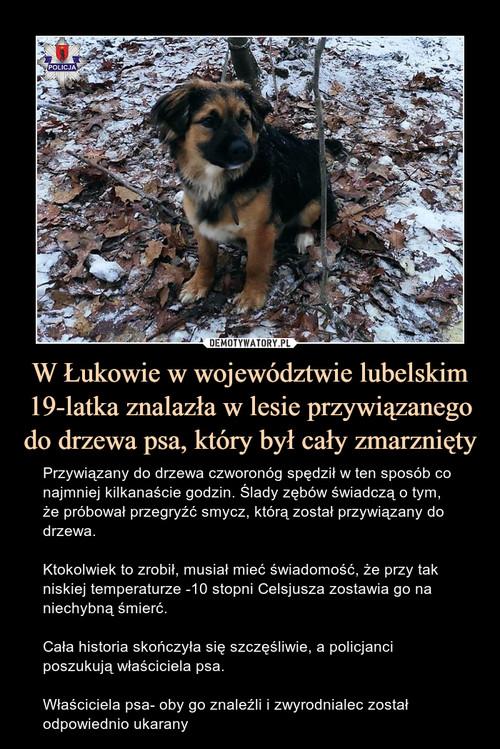 W Łukowie w województwie lubelskim 19-latka znalazła w lesie przywiązanego do drzewa psa, który był cały zmarznięty