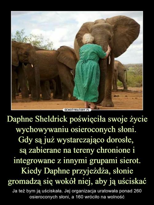 Daphne Sheldrick poświęciła swoje życie wychowywaniu osieroconych słoni.  Gdy są już wystarczająco dorosłe,  są zabierane na tereny chronione i integrowane z innymi grupami sierot. Kiedy Daphne przyjeżdża, słonie gromadzą się wokół niej, aby ją uściskać