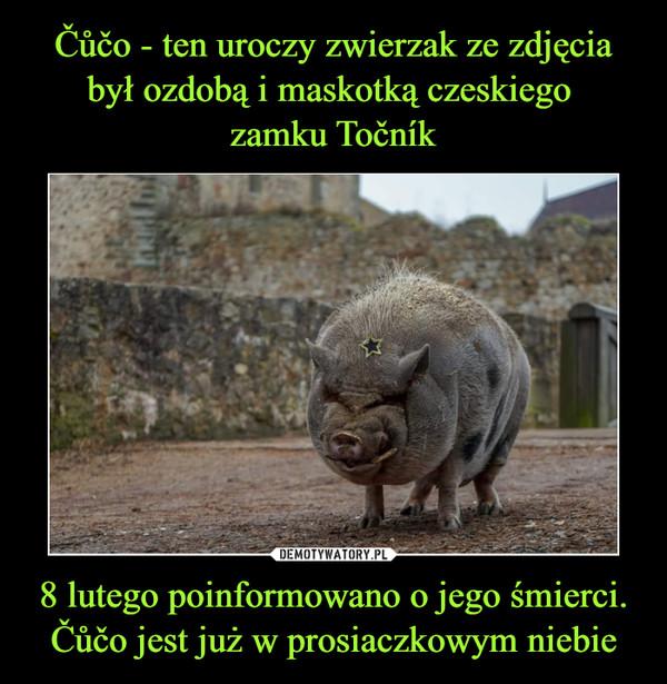8 lutego poinformowano o jego śmierci. Čůčo jest już w prosiaczkowym niebie –