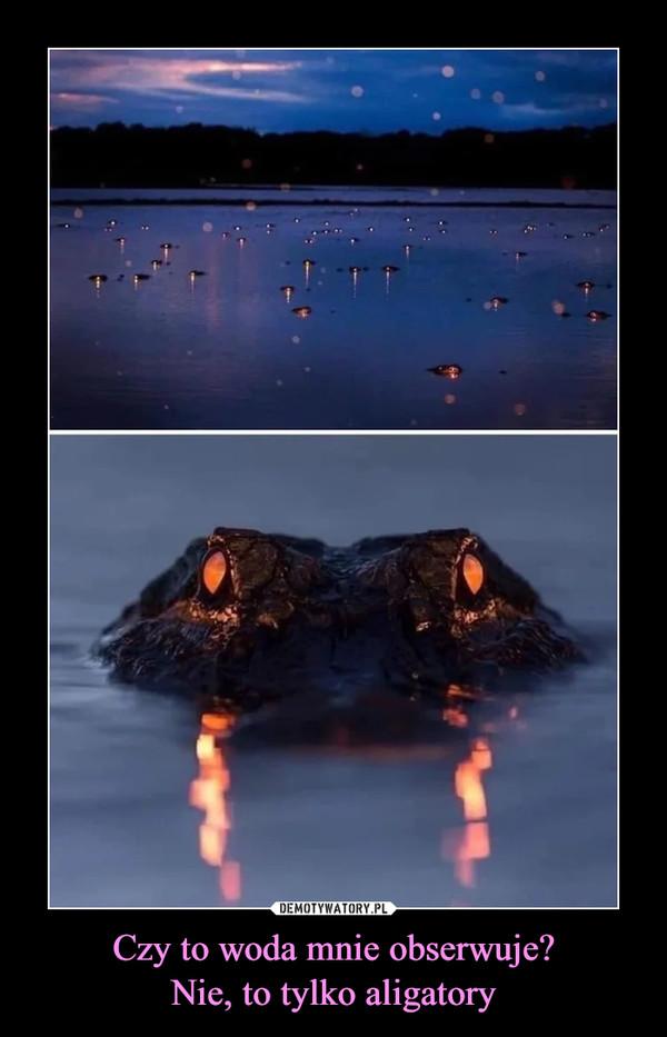 Czy to woda mnie obserwuje?Nie, to tylko aligatory –