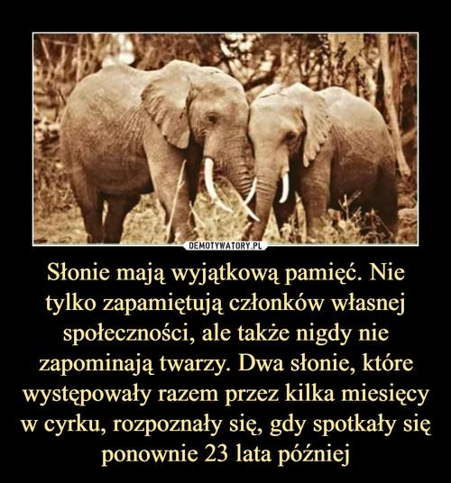 Słonie mają wyjątkową pamięć. Nie tylko zapamiętują członków własnej społeczności, ale także nigdy nie zapominają twarzy. Dwa słonie, które występowały razem przez kilka miesięcy w cyrku, rozpoznały się, gdy spotkały się ponownie 23 lata później