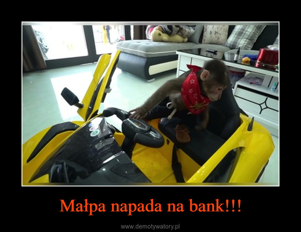 Małpa napada na bank!!! –