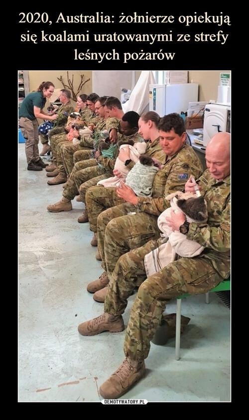 2020, Australia: żołnierze opiekują się koalami uratowanymi ze strefy leśnych pożarów