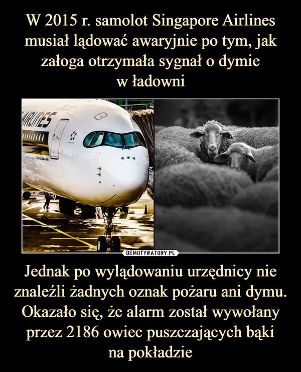 Jednak po wylądowaniu urzędnicy nie znaleźli żadnych oznak pożaru ani dymu. Okazało się, że alarm został wywołany przez 2186 owiec puszczających bąkina pokładzie –