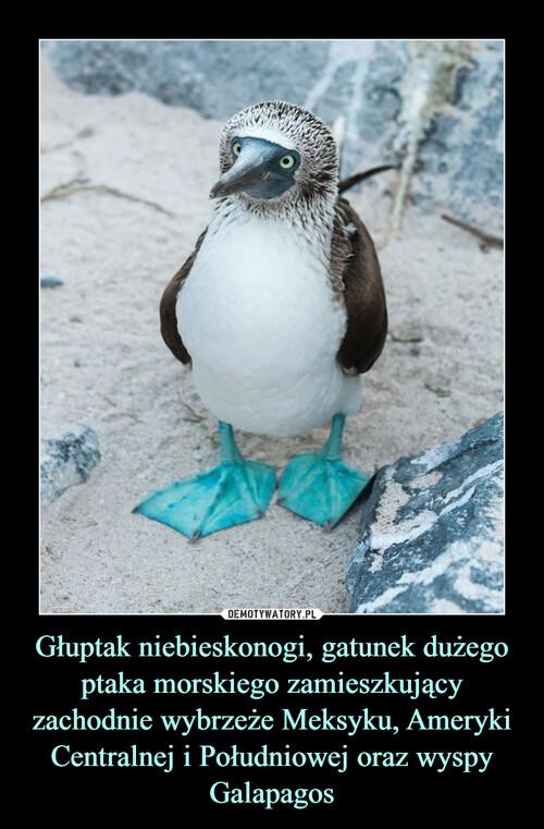 Głuptak niebieskonogi, gatunek dużego ptaka morskiego zamieszkujący zachodnie wybrzeże Meksyku, Ameryki Centralnej i Południowej oraz wyspy Galapagos