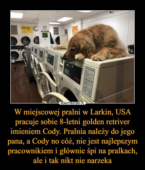 W miejscowej pralni w Larkin, USA pracuje sobie 8-letni golden retriver imieniem Cody. Pralnia należy do jego pana, a Cody no cóż, nie jest najlepszym pracownikiem i głównie śpi na pralkach, ale i tak nikt nie narzeka –